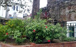 Красивый кустик с незнакомыми цветами в  церкви в старом городе Панама Сити