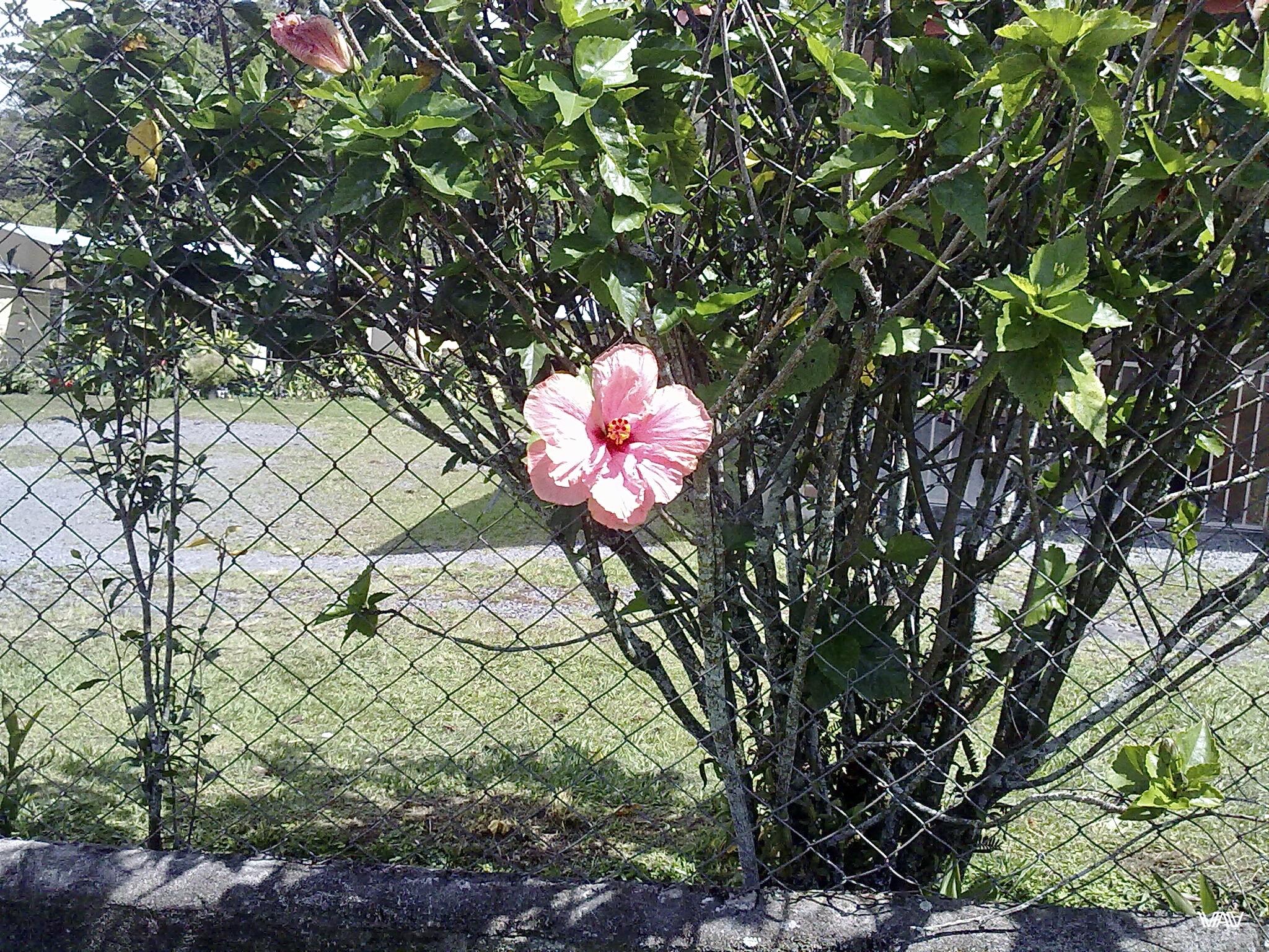 Панамские цветы великолепны! Бахо Бокете, Панама