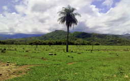Меня все ещё восхищают пальмы на горизонте. На пути к горячим источникам возле города Давид, Панама