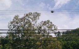 Оригинальное гнездо панамской птички. Бахо Бокете, Панама