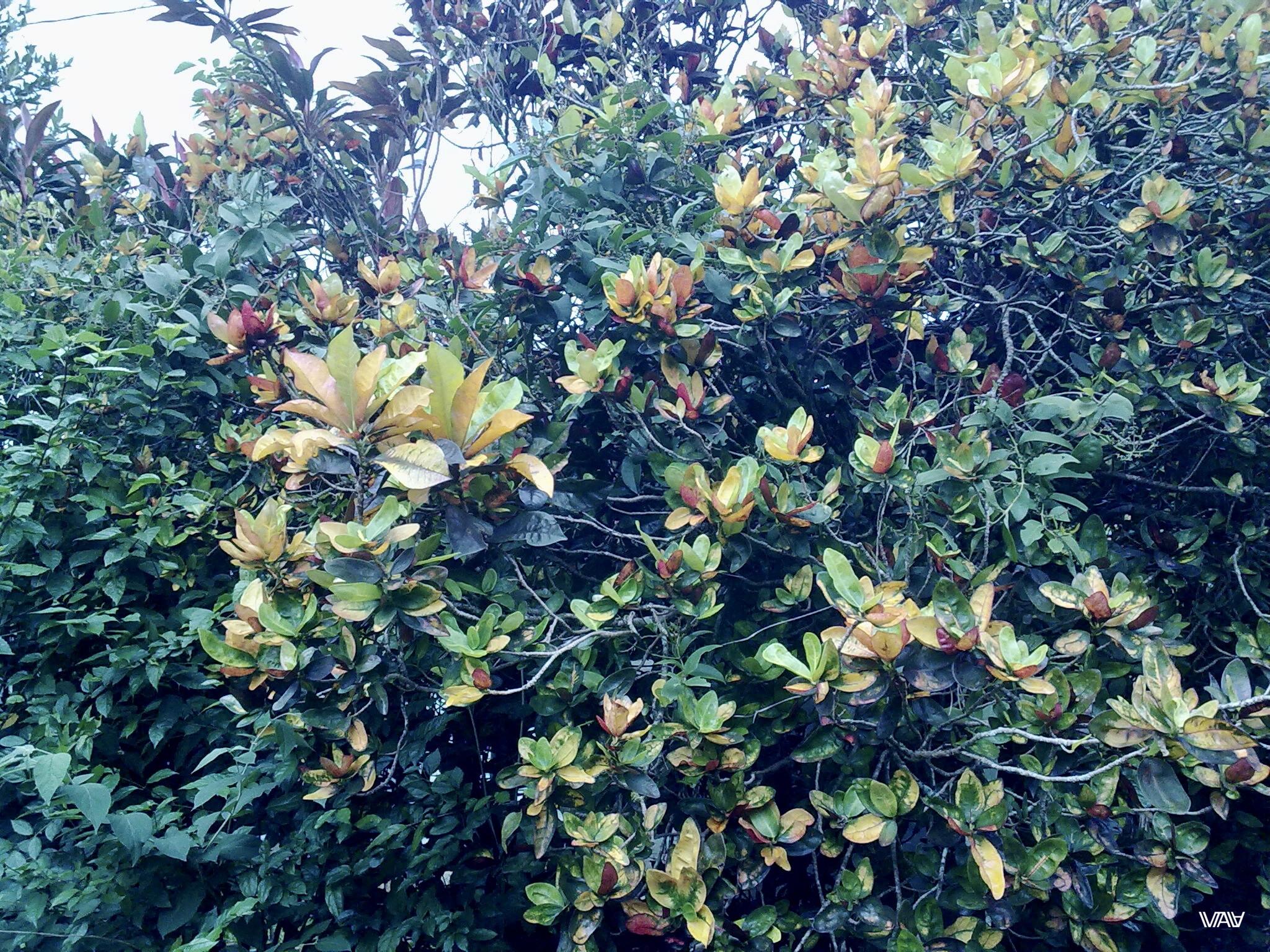 Местная растительность меня поражает! Хот Спрингс, Панама