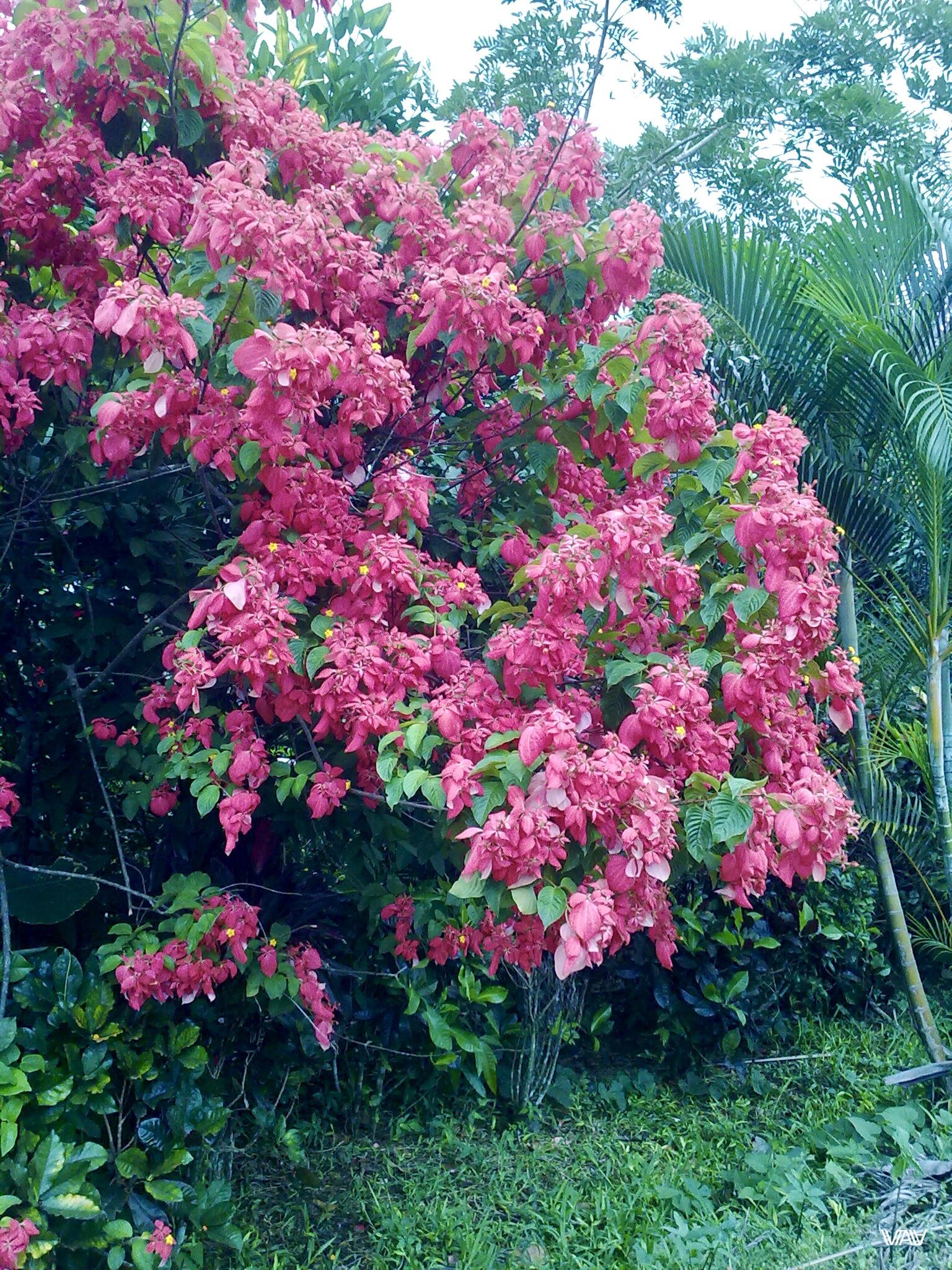 Жить среди такой красоты как в эдэмском  саду. Кальдера Хот Спрингс, Панама