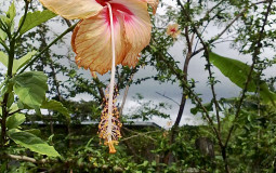 Unbelievable beautiful flowers from fairy tales. Hot Springs, Panama