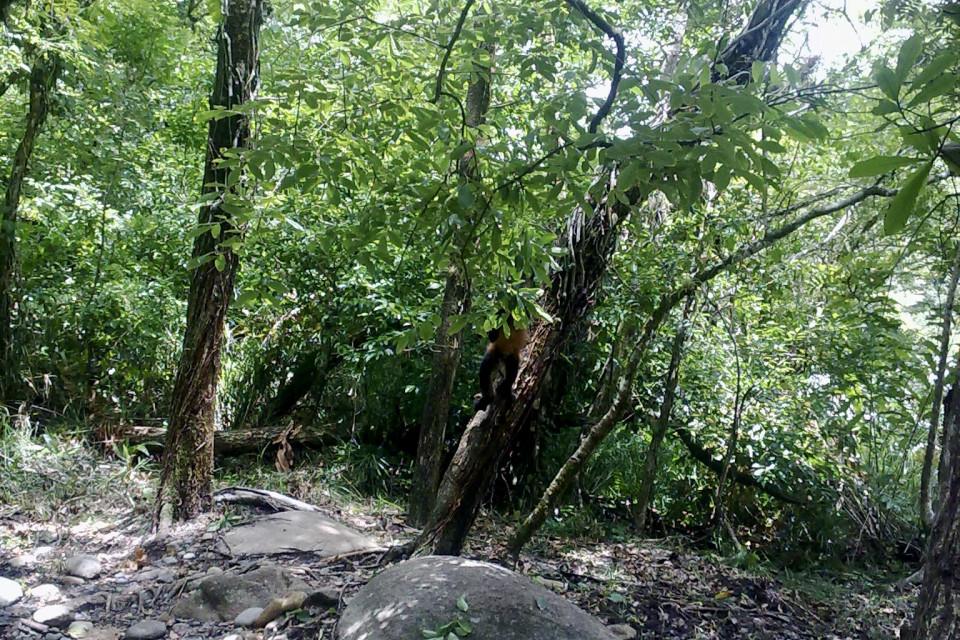 Обезьянку видите? ;) Кальдера Хот Спрингс, Панама