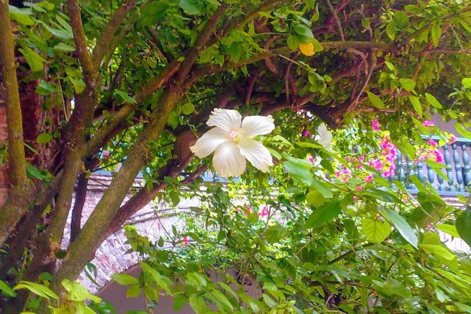 Цветочки здесь загляденье! Монастырь Папы, Картахена, Колумбия