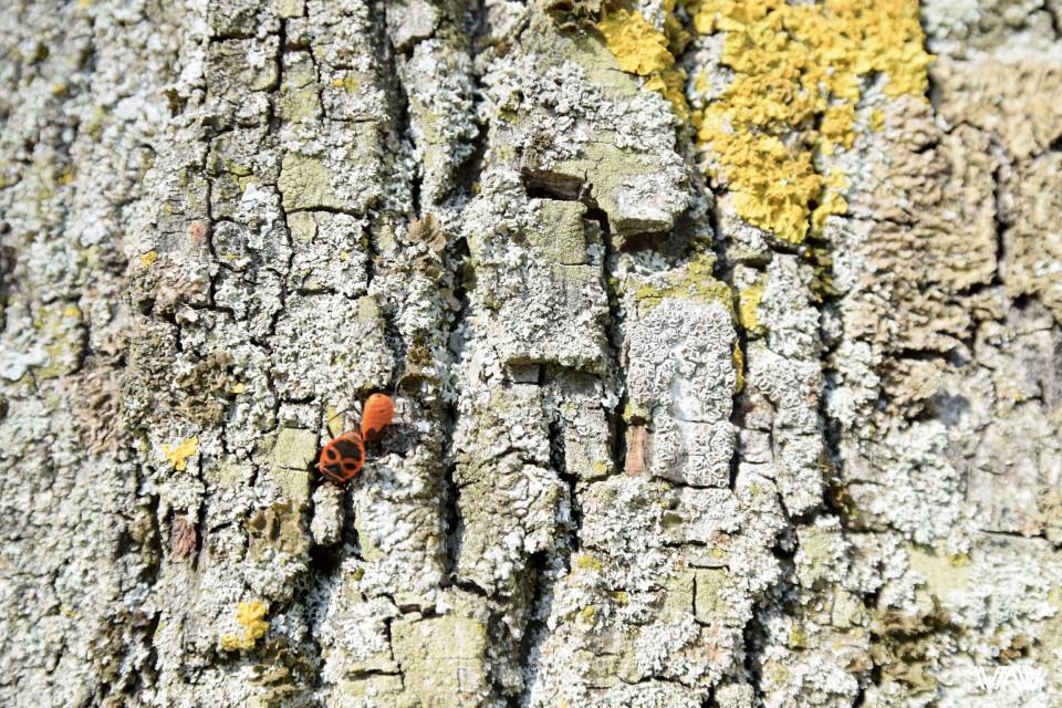 Природа не отстаёт и украшает собой деревья. Несвижский замок, Несвиж, Беларусь
