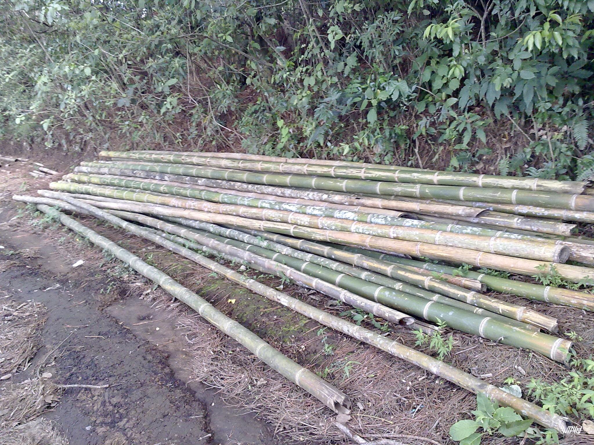 У нас обычно валяются доски. Здесь же бамбуки :D Бахо Бокете, Панама