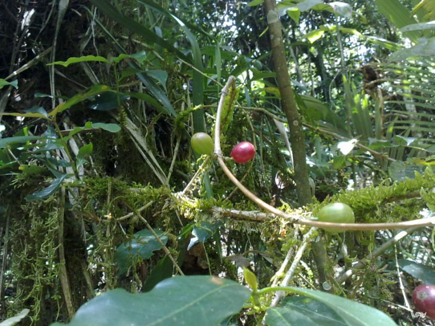 Salento is the small town among mountains and valleys. It is best known for its coffee farms.